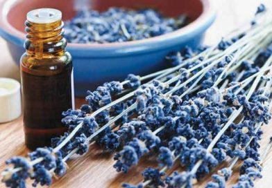 Medicina herbal: el botiquín natural en tu casa