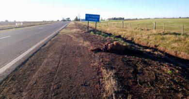 Automovilista chocó a dos caballos en la RP 70