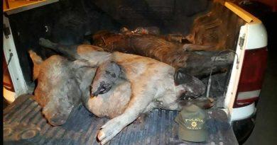 Especies silvestres cazadas fueron secuestradas en el cruce de rutas 95 y 98