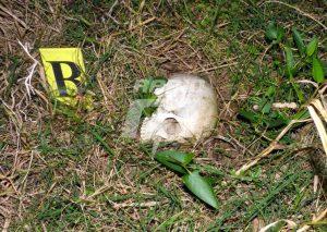 Todo lo que tenés que saber del caso Rosalía Jara: restos óseos, ropa e ¿incendio?
