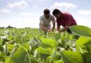 Argentina compra más porotos de soja que China y EE.UU: las razones de este contexto 'temporario'