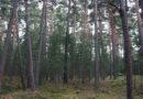 Ley Promoción Forestal