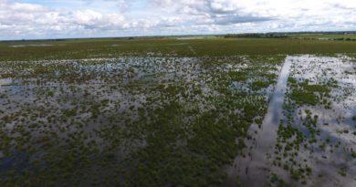 La Provincia declaró zona de desastre agropecuario a los tres departamentos del norte santafesino
