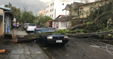 Fuerte temporal en Uruguayana deja varios árboles caídos y autos destruidos