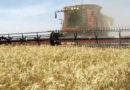Se derrumbó la producción de maquinaria agrícola: cayó 55,9%