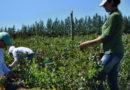 UATRE anunció un incremento salarial para el trabajador rural permanente