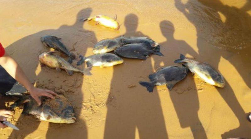 Yacyretá: Por el apagón murieron cientos de peces en el río Paraná